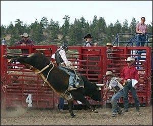 rubys-bullrider