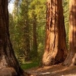 Courtesy Sequoia National Park Website.