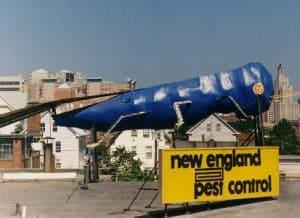 Worlds Largest Blue Bug