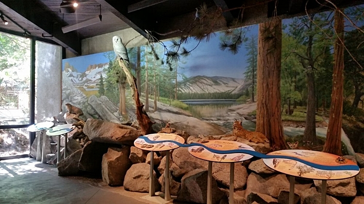 Visit the Exhibit at the Yosemite Visitors Center - Things to do with Kids at Yosemite National Park